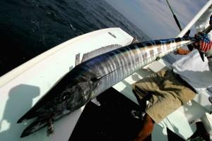 isla mujures fishing charter