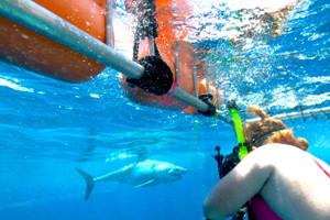 shark cage cancun