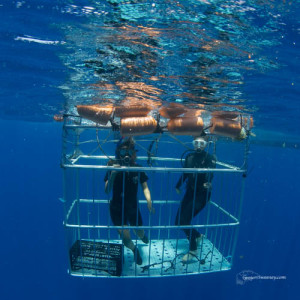 diving shark cage cancun