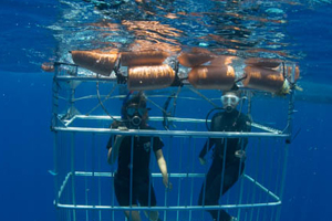 cancun shark cage dive