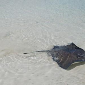 manta rays cancun