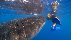 whale shark tours cancun
